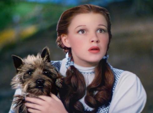 Bid-to-make-Toto-breed-top-dog-in-Kansas-fails-3L14VMRT-x-large