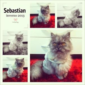 Sebastian bem feliz com a roupa