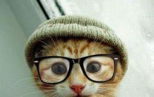 cat-cool-cute-fashion-good-Favim.com-276449