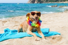 relaxing-dog-at-the-beach