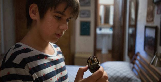 o-escaravelho-do-diabo-besouro1