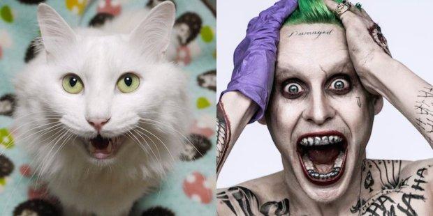 joker-cat-1438098912
