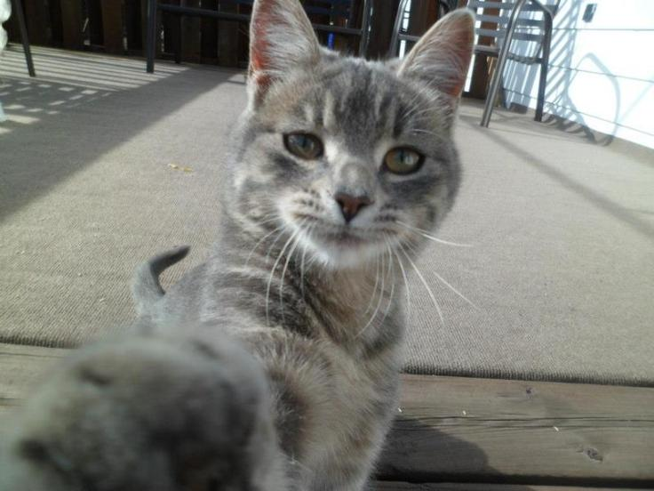 catselfie