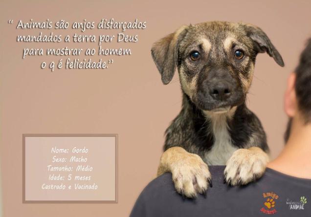 adocao cachorro 3.png